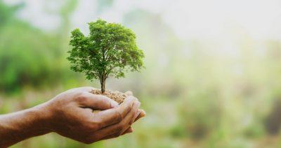 nachhaltigkeit wachstum tischlerei schreinerei 2
